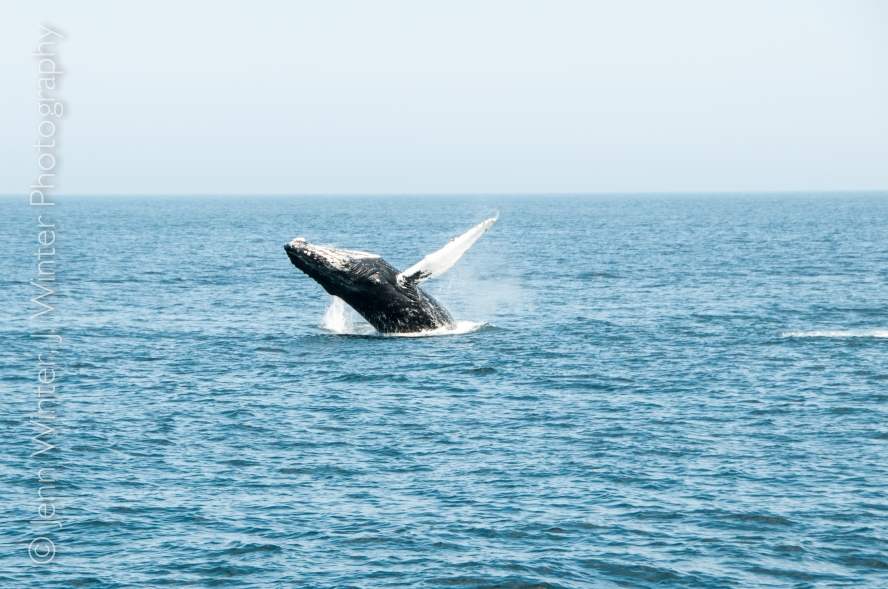 whalewatching-2