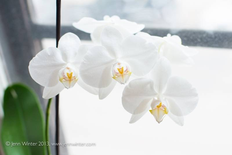 SpringFlowers-11