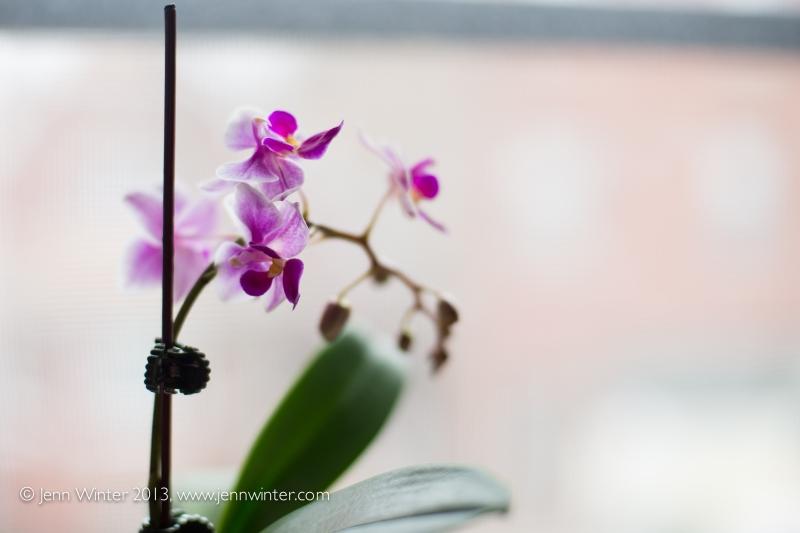 SpringFlowers-14